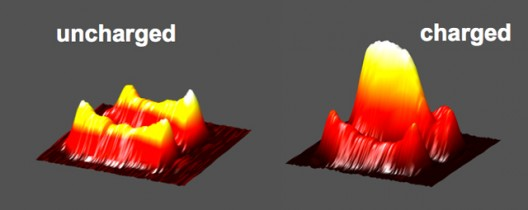 Uncharged dendrites (left) grow significantly when charged (right) as shown by MRI visualization