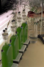 NREL is in early stages of photobiological water splitting, still too slow a process for commercialization