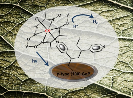 Bionic leaf follows natural processes to produce hydrogen as end product